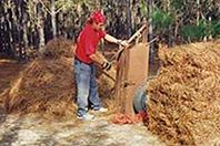Atlanta Pine Straw, Wholesale, Bulk
